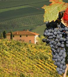 Vigneti Chianti Toscana